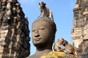 Lopburi Monkey