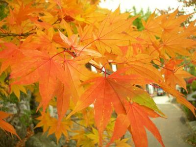 北海道三十三観音霊場第32番高野山 亮昌寺の秋の紅葉