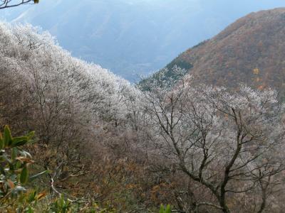 メタボ予防 はじめました。 『第6回・綿向山 樹氷と紅葉!?』