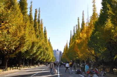 第13回 神宮外苑いちょう祭り と銀杏並木の散歩! ( ^ー゜)