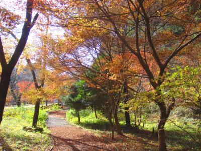 水源保全地区の小さな並木公園