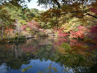 来て見てビックリ、神戸市立森林植物園の紅葉