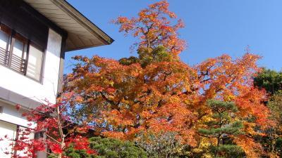 輪王寺 日本庭園 逍遥園