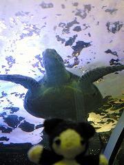 しながわ水族館に来ました。