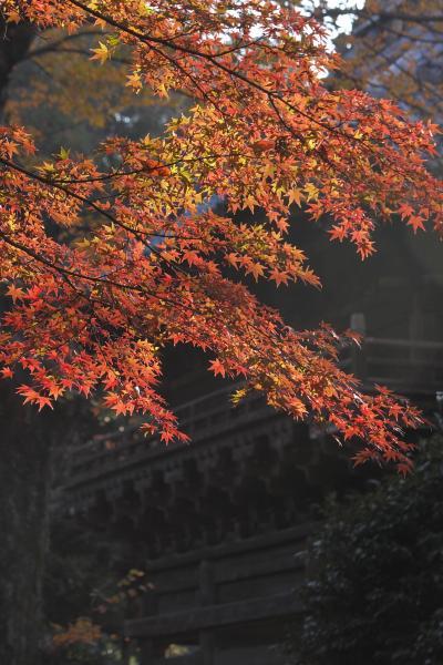 足利秋まつり2009