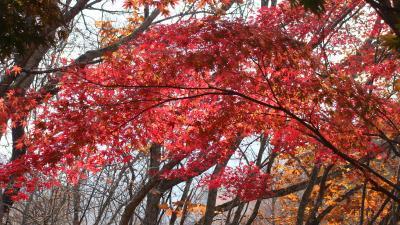 日塩もみじラインの大沼園地分岐点の紅葉