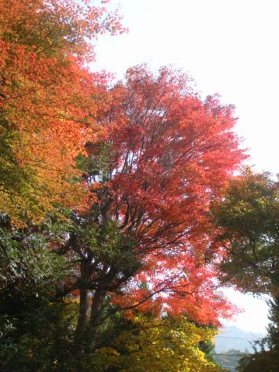 ホテルおおるりの庭園の紅葉