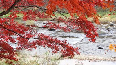 箒川沿い虹の吊り橋の紅葉
