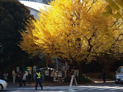2009 神宮外苑 銀杏並木 黄葉−1