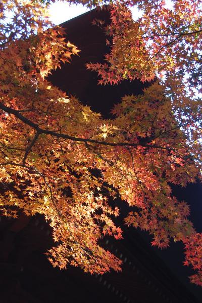 多門院の紅葉を愛でる②裏庭の紅葉