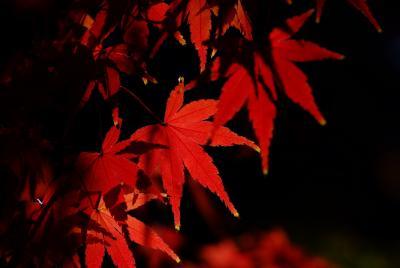 紅葉2009(越谷)