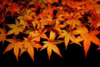 2009京都紅葉狩り