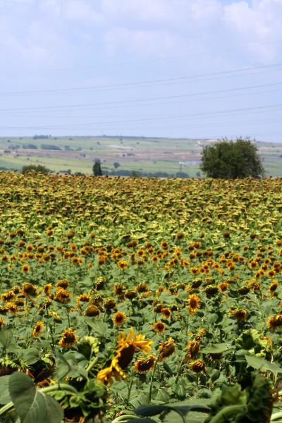 トルコを車で半周する ― 最後の訪問地チャナッカレ ②