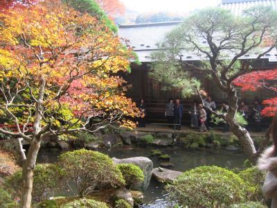 修善寺温泉郷 --- 修禅寺/東海第一園の紅葉