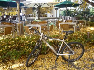 2009年11月 自転車で行ってみようかな 神宮外苑 その2