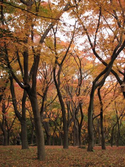 2009秋 靖国神社・北の丸公園・後楽園ライトアップ