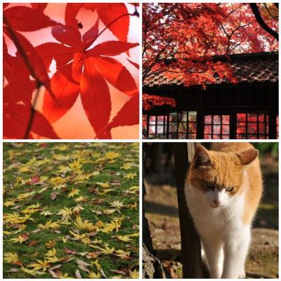 紫陽花も素晴らしいけど、紅葉も素晴らしい四季の寺・本土寺