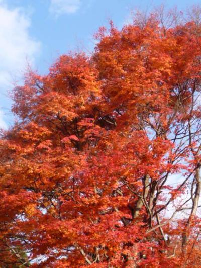 有馬紅葉【1】中国自動車道イェロー主調の重層紅葉に感動する