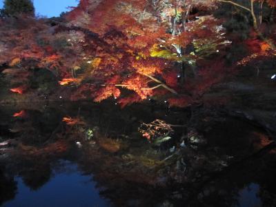 晩秋の古都へ・③高台寺のライトアップ