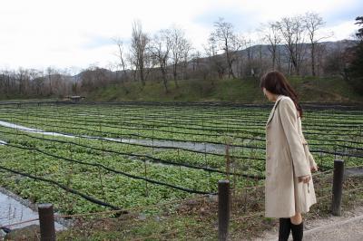 *冬空の安曇野を行く*松本城・大農わさび農園・穂高神社