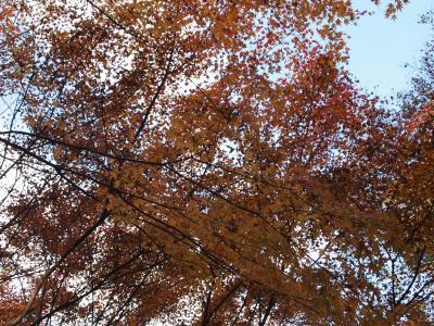 近場の紅葉をもとめて神峰山寺(かぶさんじ) へ