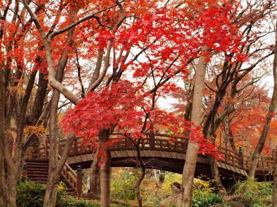 2009年12月 日本一遅いという熱海梅園の紅葉も、今年は早かったようです。