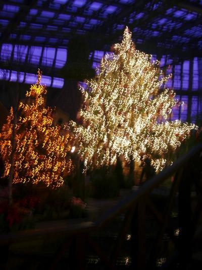 安城デンパークのクリスマスイルミネーション