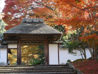 晩秋の京都 ②  哲学の道~安楽寺~法然院~真如堂