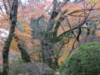 '09秋箱根⑥小涌谷「蓬莱園」の紅葉 in 強羅