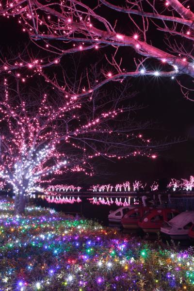 東武動物公園のイルミネーション 4Seasons / ファーストシーズン春
