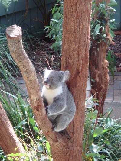 世界一周旅行 オーストラリア・シドニー