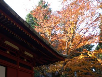 「高尾山~小仏城山 ウォーキング」2009秋