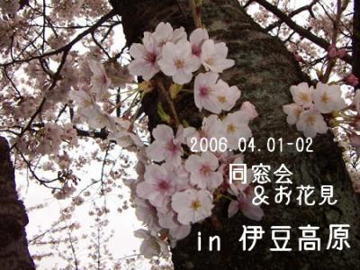 伊豆高原でお花見