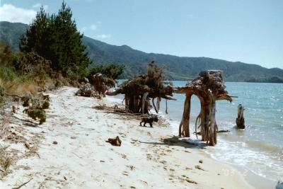 海外放浪9ヶ月 2003・NZ(3)星降るマラハウで仮装パーティ♪