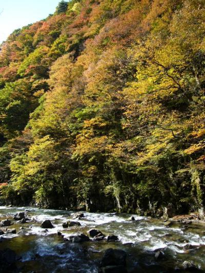 秋晴れぶらり紅葉②~岨谷峡~