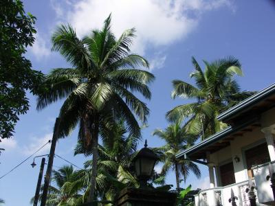 6年ぶりのスリランカへ♪年末年始を過ごす♪2日目