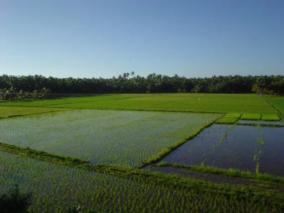 南インド24: 「ケララ州の都」 トリヴァンドラムへ