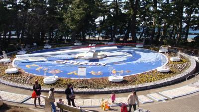 松原公園の土肥桜と伊豆土肥桜