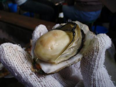 香川で牡蠣満喫☆ツアー