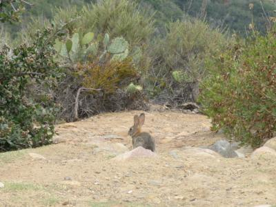 「アメリカ番外編」(2009年GW)。。。その12「Mount Soledad Mamorial Park」