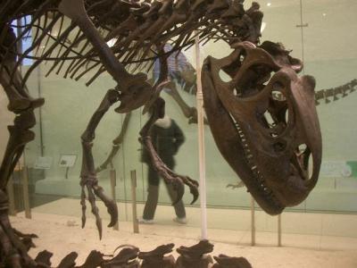 American Museum of Natural History では、なんてったって、恐竜です