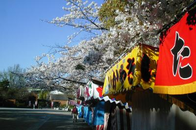 2004春、鶴舞公園の桜