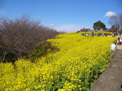 二宮~吾妻山公園