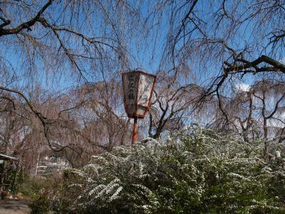ひと気のない京都原谷苑