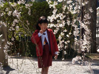 身延山久遠寺2008年-枝垂れ桜の極楽浄土