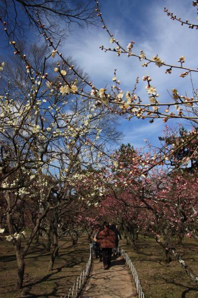 東風(こち)吹かば匂ひおこせよ梅の花 主なしとて春を忘るな 「北野天満宮」