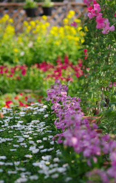 植物園に春が来た! 「花の回廊」と早春の草花