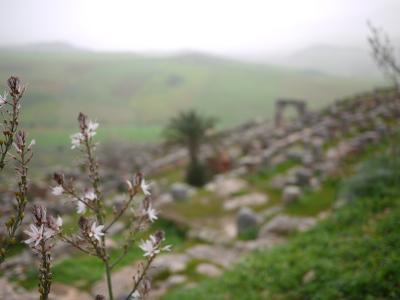 コンスタンチーヌとのその周辺遺跡(続) チディス遺跡