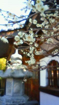 東京で楽しむ ~梅開花~