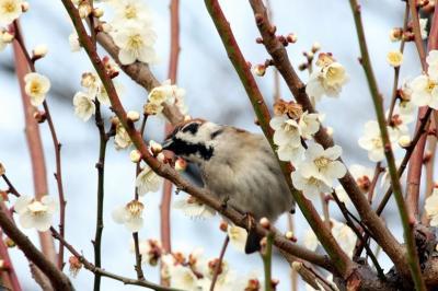 大阪街歩き(7) 梅の香り漂う大阪城公園へ